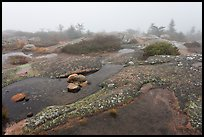 Water-filled holes in granite slabs and fog, Cadillac Mountain. Acadia National Park, Maine, USA. (color)