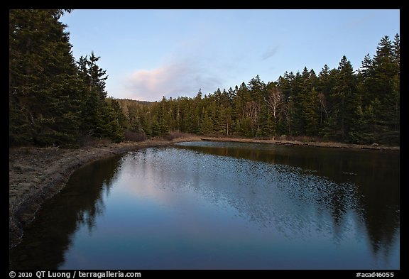 Pond and trees, Schoodic Peninsula. Acadia National Park (color)