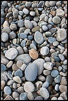 Close-up of smooth pebbles, Schoodic Peninsula. Acadia National Park, Maine, USA.
