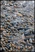 Close-up of pebbles and water, Schoodic Peninsula. Acadia National Park ( color)