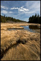 Grasses and pond, Schoodic Peninsula. Acadia National Park, Maine, USA. (color)