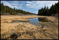 Marsh in winter, Schoodic Peninsula. Acadia National Park ( color)