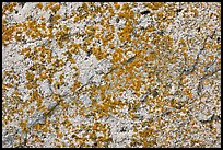 Lichens on light granite, Schoodic Peninsula. Acadia National Park ( color)