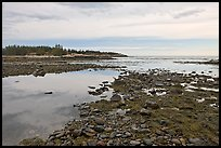 Seaweed and pebbles at low tide, Schoodic Peninsula. Acadia National Park ( color)