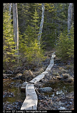 Boardwalk in forest, Isle Au Haut. Acadia National Park (color)