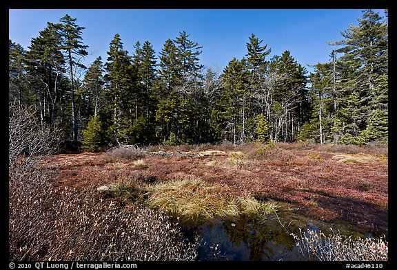 Bog and forest, Isle Au Haut. Acadia National Park (color)
