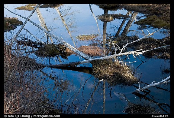 Swamp reflections, Isle Au Haut. Acadia National Park, Maine, USA.