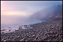 Boulder beach and cliffs in fog, dawn. Acadia National Park, Maine, USA. (color)