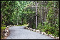 Carriage road in summer. Acadia National Park ( color)