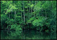 Trees reflected in pond in summer. Congaree National Park, South Carolina, USA.