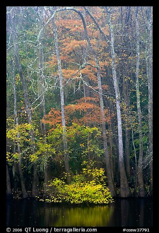Fall colors at the edge of Weston Lake. Congaree National Park (color)
