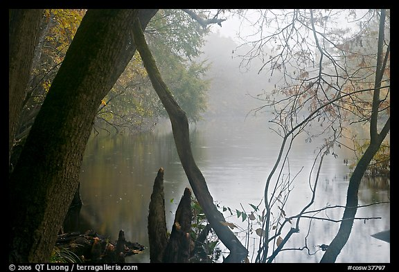Weston Lake and fog. Congaree National Park (color)