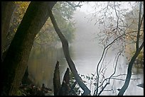 Weston Lake and fog. Congaree National Park, South Carolina, USA. (color)