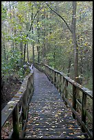 High boardwalk with fallen leaves. Congaree National Park, South Carolina, USA. (color)