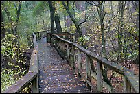 High boardwalk in deciduous forest with fallen leaves. Congaree National Park, South Carolina, USA.