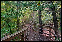 Boardwalk, forest in autumn colors. Congaree National Park, South Carolina, USA. (color)