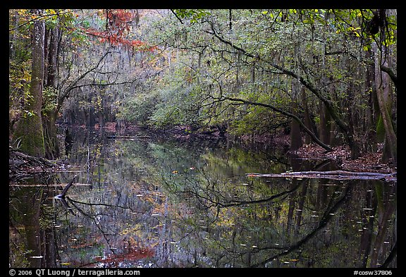Cedar Creek reflections. Congaree National Park (color)