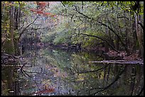 Cedar Creek reflections. Congaree National Park, South Carolina, USA.