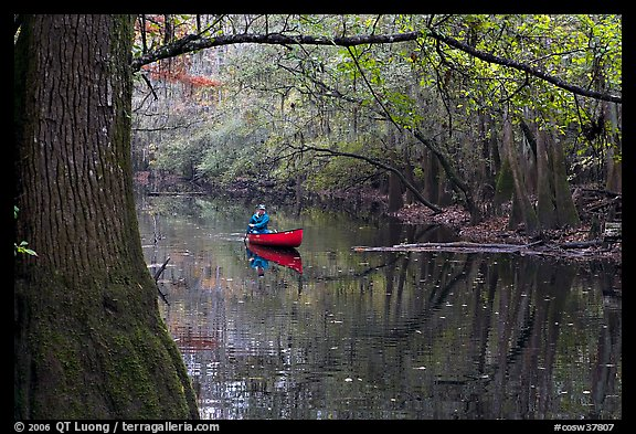 Canoe on Cedar Creek framed by overhanging branch. Congaree National Park (color)