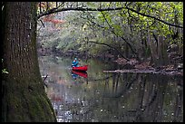 Canoe on Cedar Creek framed by overhanging branch. Congaree National Park, South Carolina, USA.