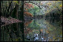 Arched branches and reflections in Cedar Creek. Congaree National Park, South Carolina, USA. (color)