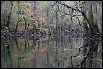 Cedar Creek with trees in autumn colors reflected. Congaree National Park, South Carolina, USA. (color)