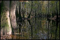 Sunny forest reflections in Cedar Creek. Congaree National Park, South Carolina, USA.