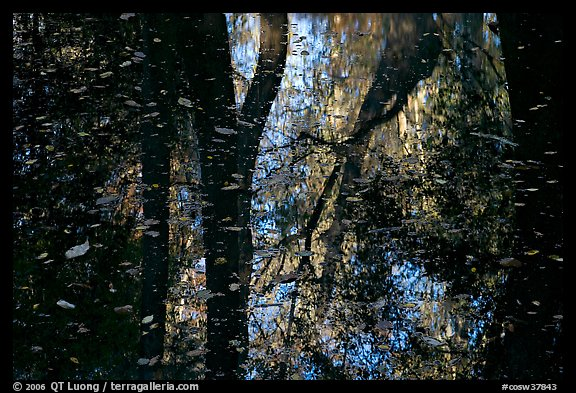 Reflections and falling leaves in creek. Congaree National Park (color)