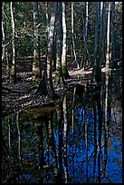 Trees trunks and reflections. Congaree National Park, South Carolina, USA.