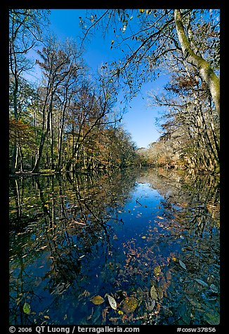 Wise Lake on a sunny day. Congaree National Park (color)