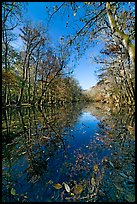 Wise Lake on a sunny day. Congaree National Park, South Carolina, USA. (color)