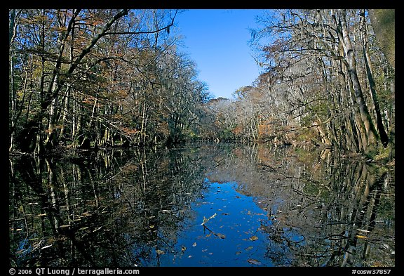 Wise Lake and reflections. Congaree National Park (color)
