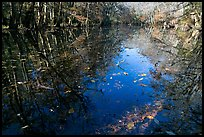 Fallen leaves and reflections in Wise Lake. Congaree National Park, South Carolina, USA.