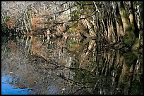 Reflections, Wise Lake. Congaree National Park, South Carolina, USA.