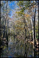 Tall trees around creek. Congaree National Park, South Carolina, USA.