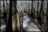 Low boardwalk in sunny forest. Congaree National Park, South Carolina, USA.