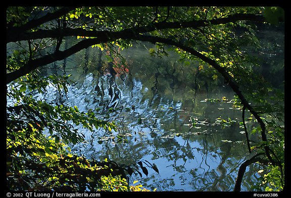 Arching tree and reflexion on Kendal lake. Cuyahoga Valley National Park, Ohio, USA.
