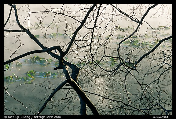 Branches and mist, Kendal lake. Cuyahoga Valley National Park (color)