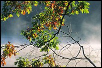 Branches and mist, Kendal lake. Cuyahoga Valley National Park, Ohio, USA.