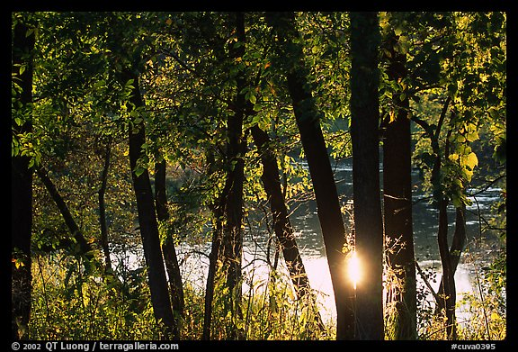 Sun reflected on a pond through trees. Cuyahoga Valley National Park (color)