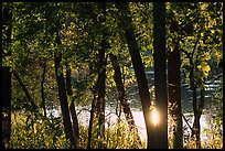 Sun reflected on a pond through trees. Cuyahoga Valley National Park ( color)