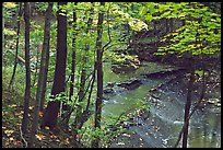 Trees and creek with Cascades near Bridalveil falls. Cuyahoga Valley National Park, Ohio, USA. (color)