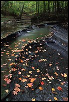 Fallen leaves and cascades near Bridalveil falls. Cuyahoga Valley National Park, Ohio, USA. (color)