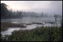 Beaver marsh and fog at dawn. Cuyahoga Valley National Park, Ohio, USA.