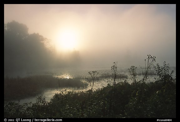 Beaver marsh at sunrise. Cuyahoga Valley National Park, Ohio, USA.