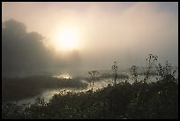 Beaver marsh at sunrise. Cuyahoga Valley National Park, Ohio, USA. (color)