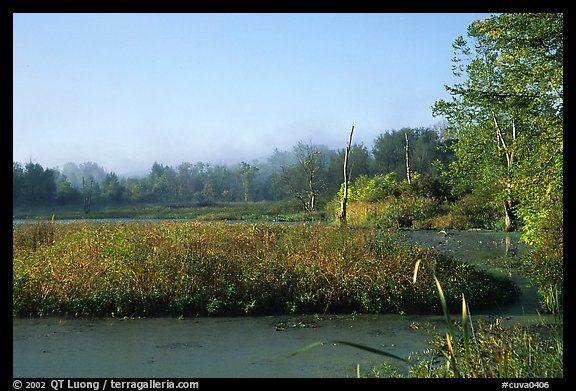 Beaver marsh, early morning. Cuyahoga Valley National Park (color)