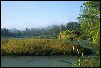 Beaver marsh, early morning. Cuyahoga Valley National Park, Ohio, USA.