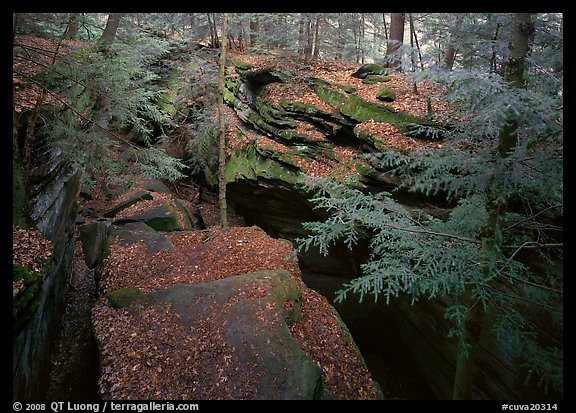 Trees and sandstone blocs,  The Ledges. Cuyahoga Valley National Park (color)