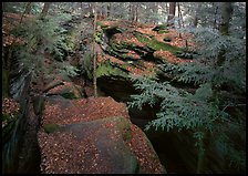 Trees and sandstone blocs,  The Ledges. Cuyahoga Valley National Park, Ohio, USA. (color)